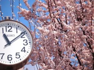 最高気温9℃もここだけ春!