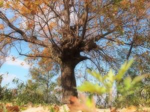 大きなクヌギの木の下で・・・