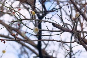 寒波の中にも春の足音