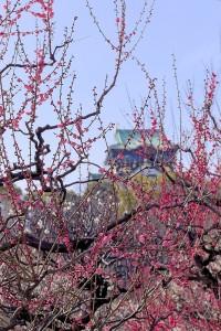 大阪城梅林へ行ってきた。いろんな種類の梅が見れます。来年は午前中に行くべし。