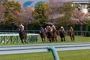 桜花賞前日の阪神競馬場。3レース賭けて2勝1敗は超上出来。まさにビギナーズラックでした。