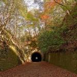 最後は紅葉のトンネル。